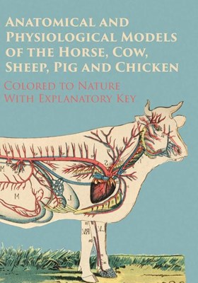 Anatomical and Physiological Models of the Horse, Cow, Sheep, Pig and Chicken - Colored to Nature - With Explanatory Key